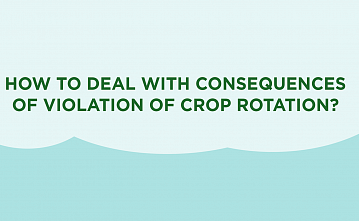 How to deal with the effects of non-compliance with crop rotation