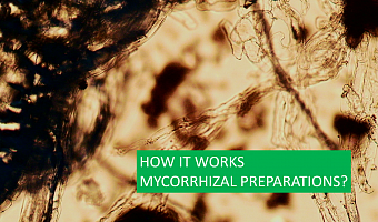 "Mycorrhiza by ""BTU-Center"": assessment of the specialist"